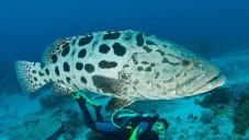 Жизнь на Большом Барьерном рифе