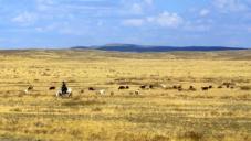 Тайны Великой степи